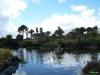 Torbay-Palm-Garden-5